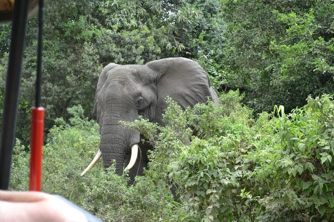 Elephant asking us to move jeep arusha national park tanzania