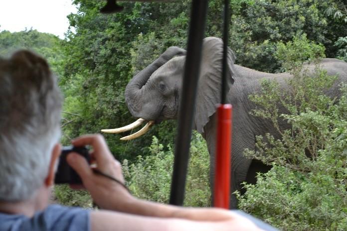 Elephant upset jeep in way arusha national park tanzania